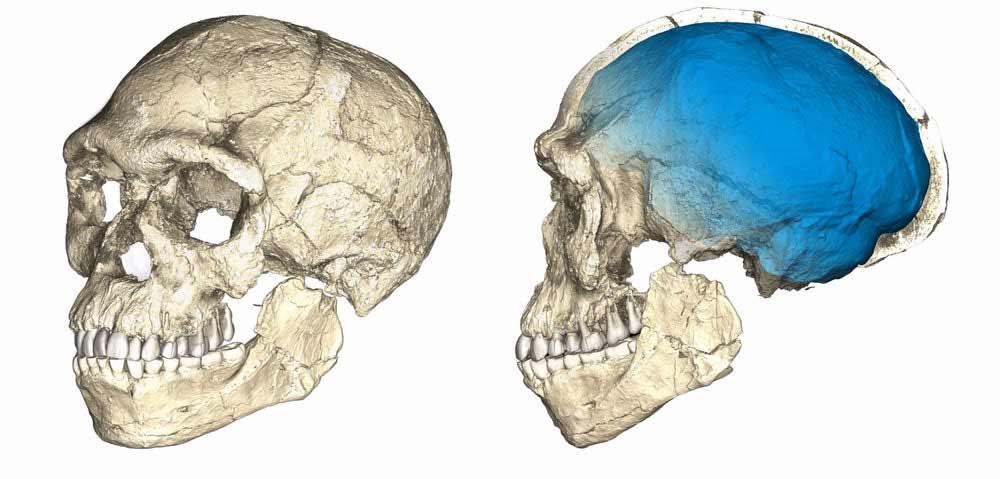 oldest-homo-sapiens-fossil-4
