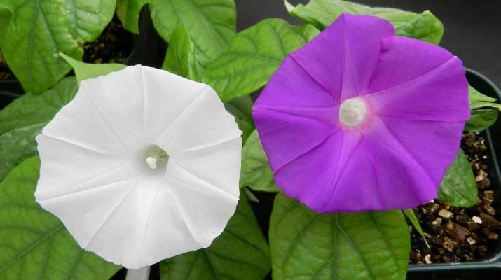 crispr-flower-1