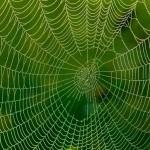 ใยของแมงมุมที่ถูกป้อนด้วยกราฟีนกลายเป็นวัสดุที่แข็งแรงที่สุดในโลก