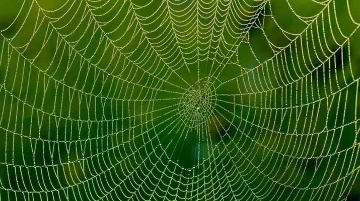 graphene-fed-spider-silk-1