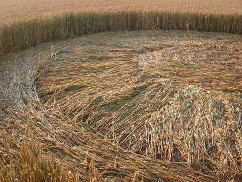 crop-circles-2