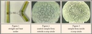 crop-circles-20