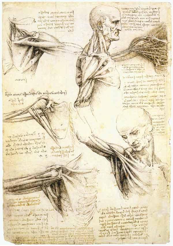 da-vinci-anatomy-3