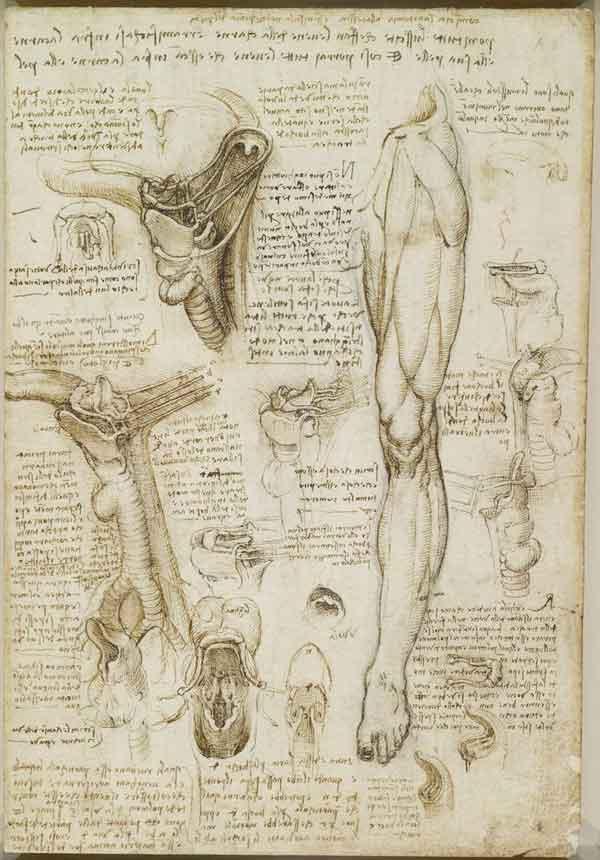 da-vinci-anatomy-4