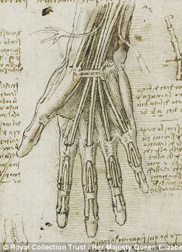 da-vinci-anatomy-5