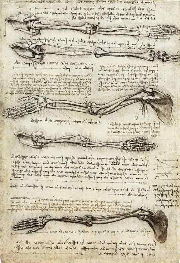 da-vinci-anatomy-6