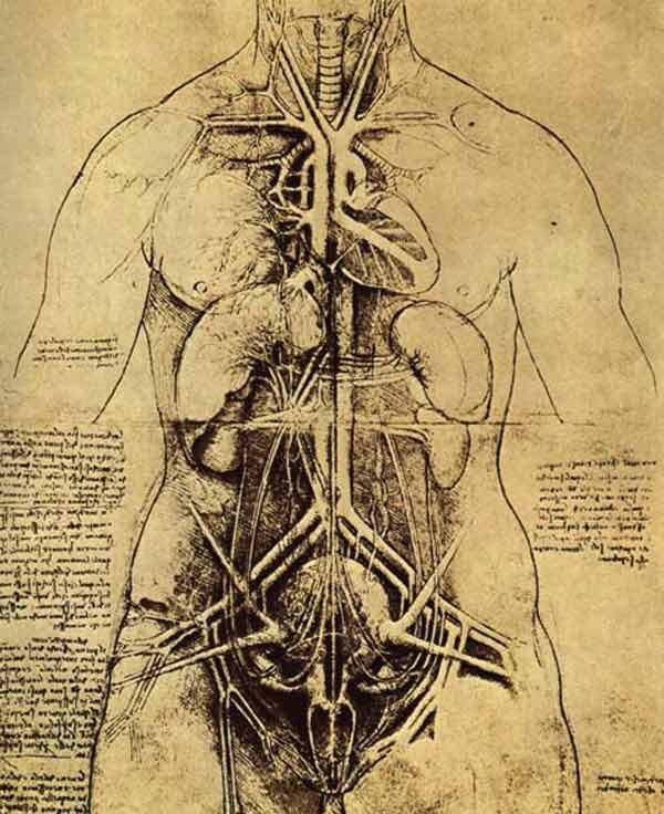da-vinci-anatomy-7