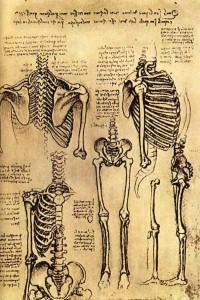 da-vinci-anatomy-9