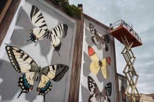butterfly-murals-mantra-2