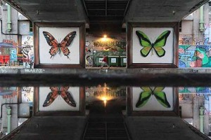 butterfly-murals-mantra-7