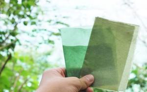 evoware-seaweed-packaging-1