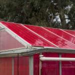 โรงเรือนปลูกพืชโซลาร์ ผลิตไฟฟ้าและปลูกพืชได้ผลดีในเวลาเดียวกัน