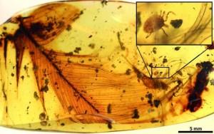 amber-tick-dinosaur-blood-1