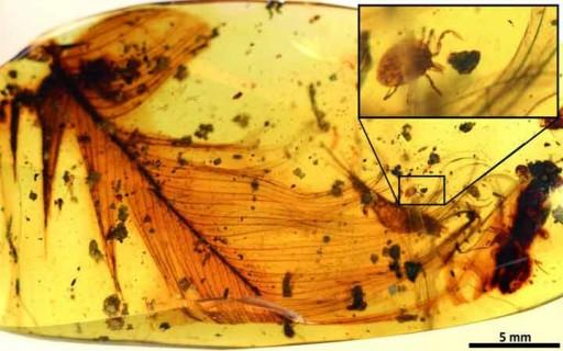 จูราสสิค พาร์ค? พบเห็บดูดเลือดไดโนเสาร์ถูกเก็บไว้ในอำพันอายุ 99 ล้านปี