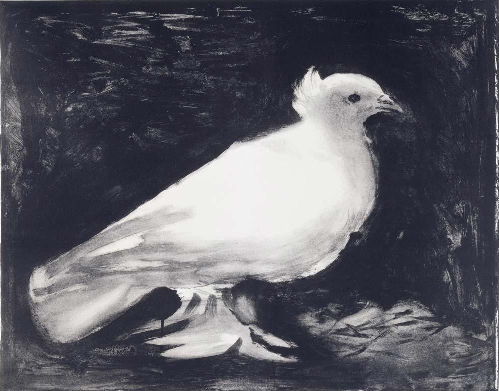 Pablo-Pablo-Picasso-dove-5