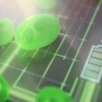 เซลล์เชื้อเพลิงสาหร่ายดีไซน์ใหม่ประสิทธิภาพสูงกว่าเดิม 5 เท่า
