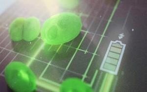 algae-fuel-cell-1