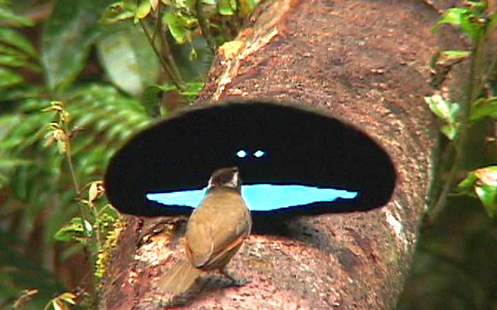 bird-of-paradise-1