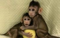 นักวิทยาศาสตร์จีนโคลนนิ่ง 'ลิง' สำเร็จแล้ว ขั้นต่อไปอาจโคลนนิ่ง 'มนุษย์'