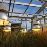 เร่งผลผลิตข้าวเพิ่มขึ้น 3 เท่าด้วยเทคนิคการปลูกพืชในอวกาศของนาซา