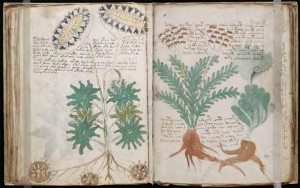 voynich-manuscript-decode-1