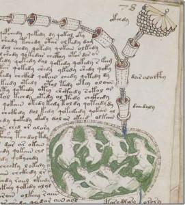 voynich-manuscript-decode-4