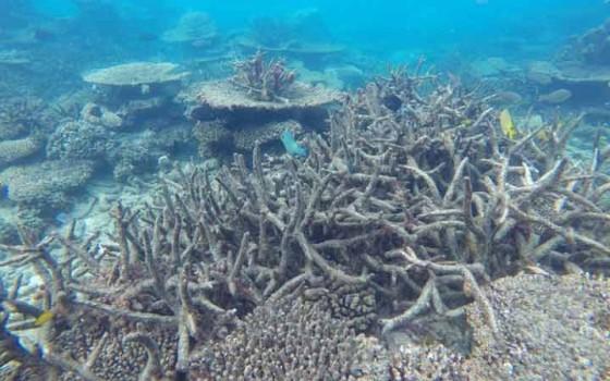 Great Barrier Reef ผ่านการตาย-เกิดใหม่มา 5 ครั้งแล้ว แต่ครั้งนี้อาจเป็นครั้งสุดท้าย