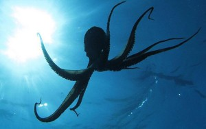 octopus-from-space-evolution-1