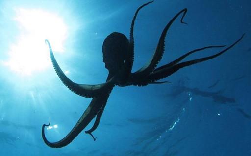 นักวิจัยระบุปลาหมึกยักษ์เป็นเอเลี่ยนที่มาจากต่างดาวเมื่อหลายร้อยล้านปีก่อน