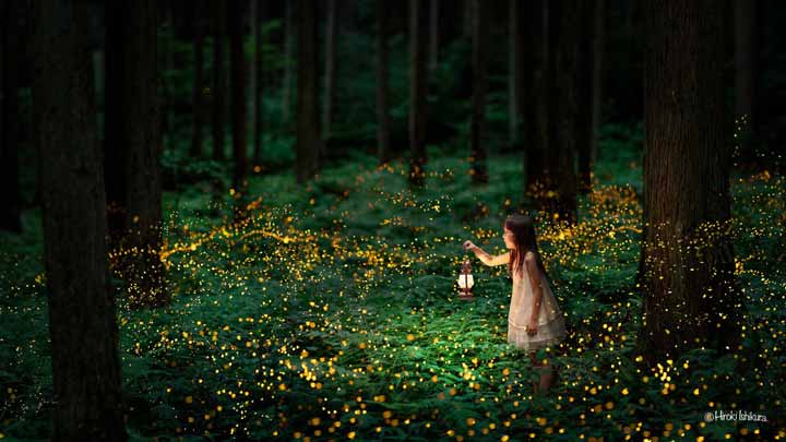 fireflies-3