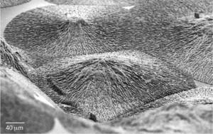 regenerate-enamel-1