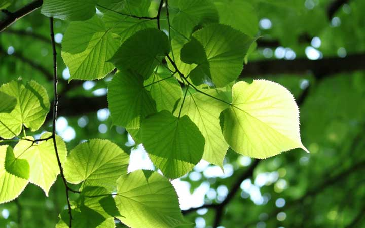 semi-artificial-photosynthesis-1
