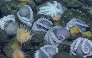 octopus-nursery-1
