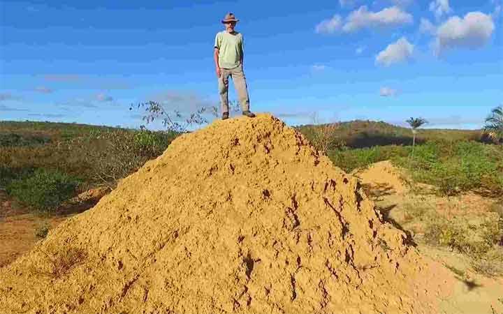 4000-years-massive-termite-mounds-1