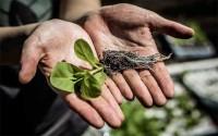 นักวิจัยพบวิธีเพิ่มผลผลิตของพืช 40% ด้วยการแก้ไขปัญหาเรื่องการสังเคราะห์แสง