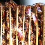 ฟาร์มแมลงสาบ: ทางเลือกใหม่ที่กำลังมาแรงสำหรับการแก้ปัญหาเศษอาหารล้นโลก