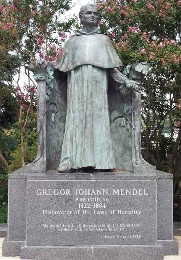 gregor-mendel-8