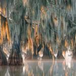พบต้นไม้อายุ 2,624 ปีในอเมริกาแต่มันอาจตายด้วยสภาพภูมิอากาศที่กำลังเปลี่ยนแปลง