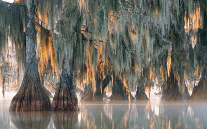 2624-years-trees-1