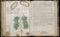 นักวิจัยอังกฤษไขปริศนาหนังสือลึกลับที่สุดในโลก Voynich Manuscript สำเร็จแล้ว?