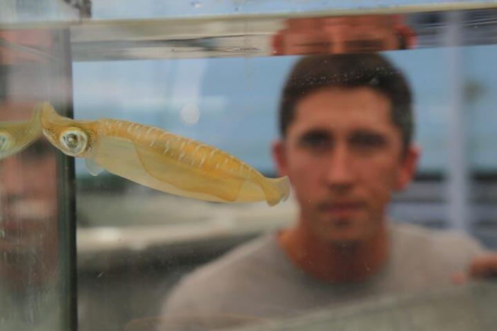 squid-under-climate-change-2