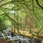 ไอร์แลนด์มีแผนปลูกต้นไม้ 440 ล้านต้นภายในปี 2040 เพื่อต่อสู้สภาพอากาศเปลี่ยนแปลง