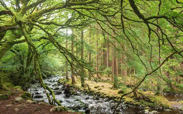 ireland-new-forest-1