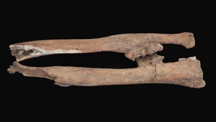 rosetta-warrior-bones-04
