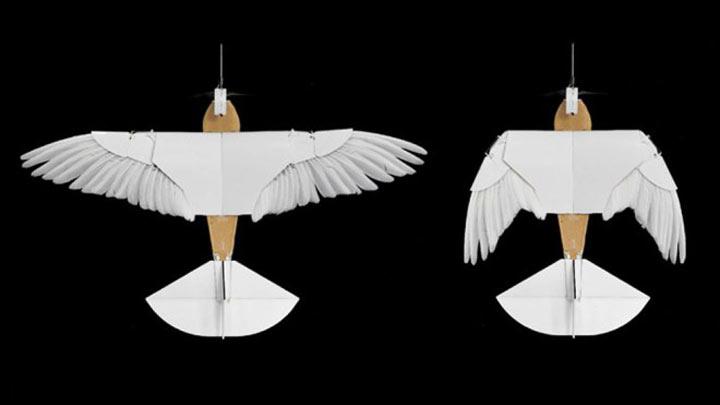 pigeonbot-4