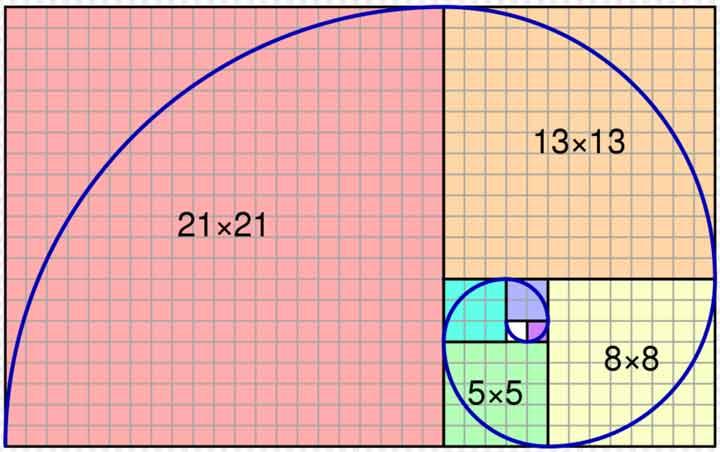 golden-ratio-in-nature-3