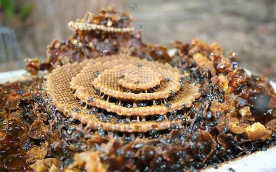 น่าทึ่ง! ผึ้งสร้างรังรูปเกลียวโดยใช้หลักการเดียวกับการก่อตัวของคริสตัล