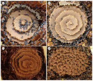spiral-beehives-2