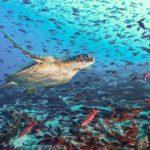 10 เรื่องจริงสุดทึ่งใต้มหาสมุทรของโลกที่คุณอาจยังไม่เคยรู้มาก่อน