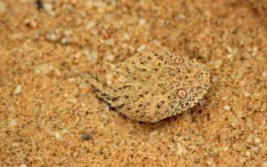 amazing-camouflaged-animals-01